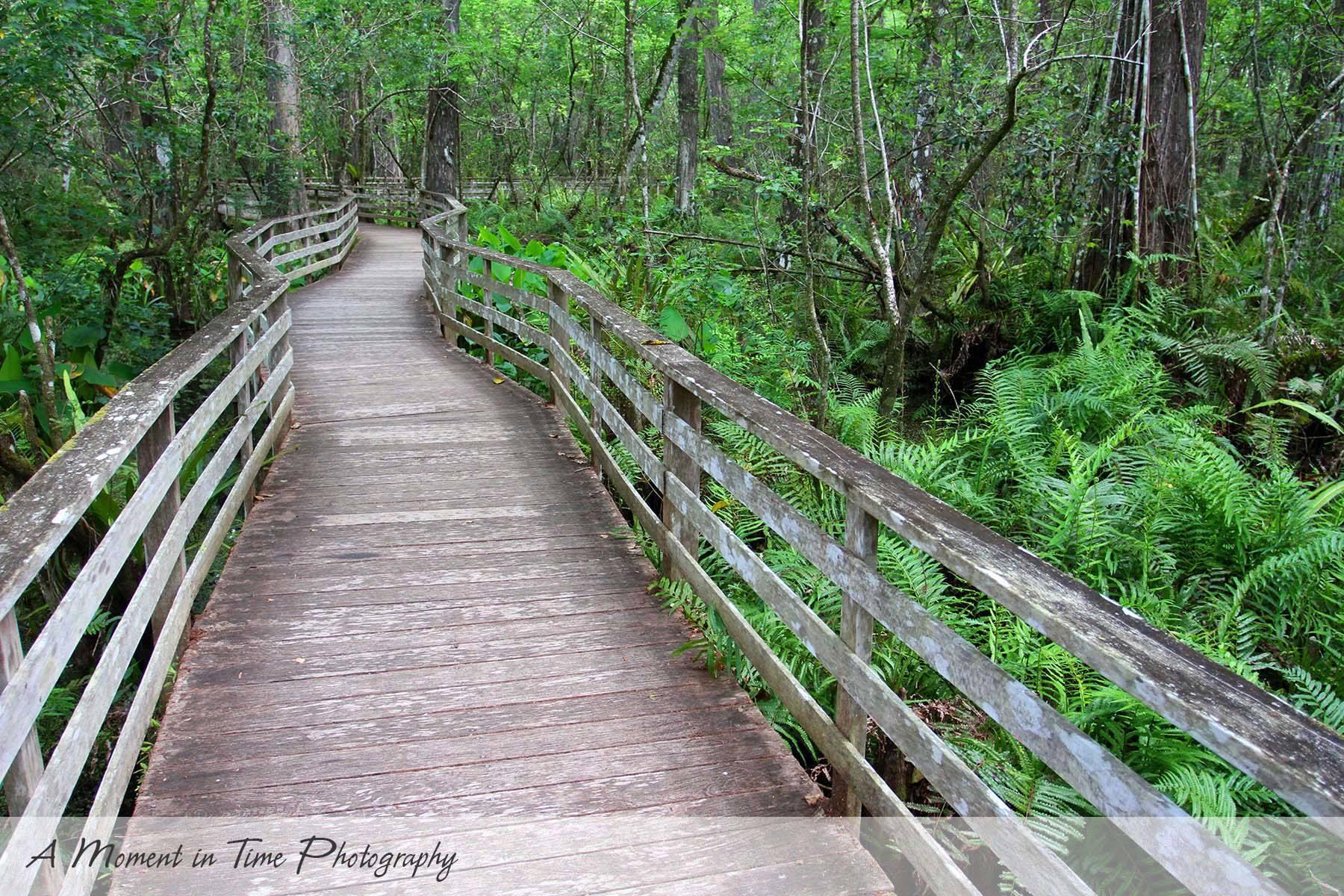 Audubon Corkscrew Swamp Sanctuary A Moment In Time